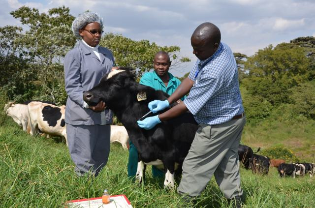 Infection & treatment ECF vaccine