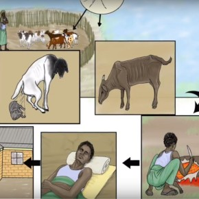 Introducing English and Swahili instructional videos on the patterns, signs, symptoms and control of Rift Valley fever